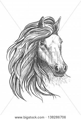 Sketch of horse head with glorious wavy mane and calm look, playful glance and elegant neck. Isolated on white. For equestrian sport design