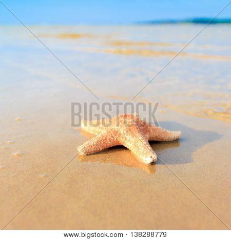 Shell Sea Fish