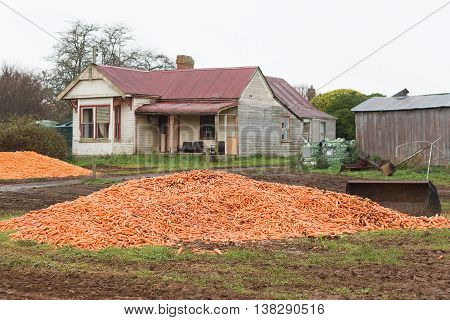Dumped Carrot Crop Tasmania