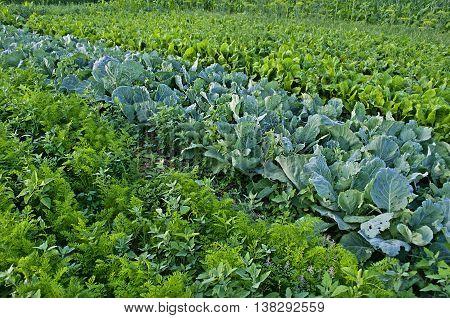 Vegetable Garden Background