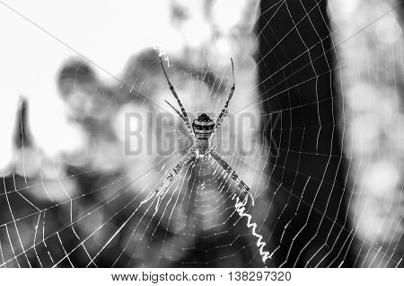 The B/W image of spider with webber