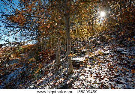 Forest in Moncayo Natural Park, Zaragoza, Aragon, Spain.