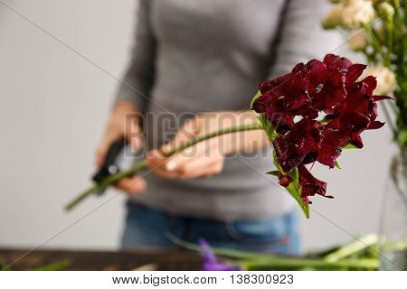 Girl in gray blouse and jeans make a bouquet over gray background, cutting alstroemeria stem, roses in vase.