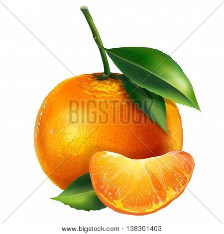 Mandarin with leaves. Isolated illustration on white background.