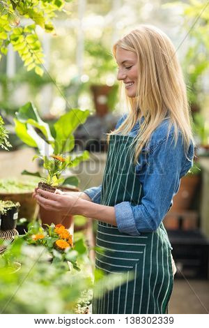 Side view of happy female gardener holding sapling at greenhouse