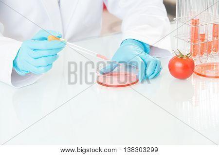 Scientist Examining Tomato Genetic Modification Research