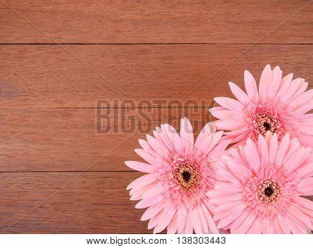 Three sweet pink Gerbera flower on dark wood background in top view