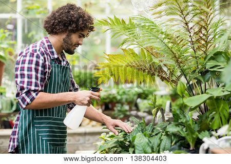 Side view of male gardener spraying water on plants at greenhouse