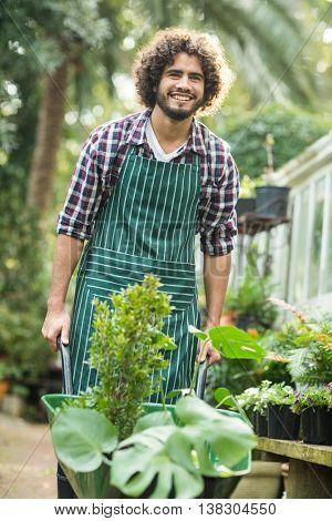 Happy male gardener carrying plants in wheelbarrow outside greenhouse