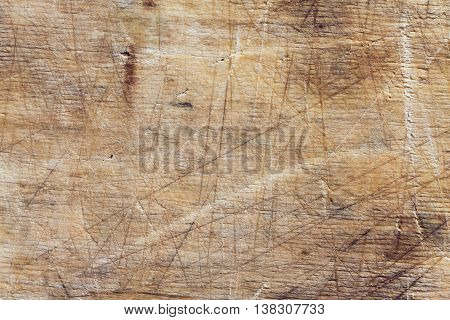 The texture of bark wood use as natural background