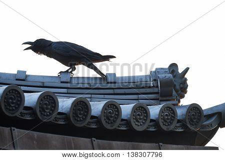Crow on Sensoji Buddhist Temple, Asukusa, Japan