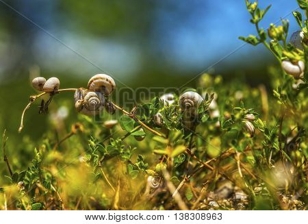 Bunch of snails taking a rest on a plant.