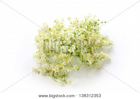 Sambucus nigra elderberry herb with flowers on white background.