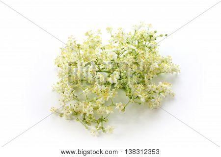 Sambucus nigra elderberry herb with flowers on white background.