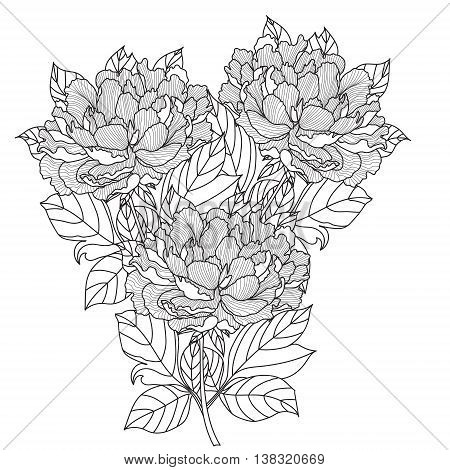 Peony bouquet. Vector. Coloring book page for adults. Hand drawn artwork. Love bohemia concept for wedding invitation, card, ticket, branding, logo, label. Gift for girl, women. Black and white