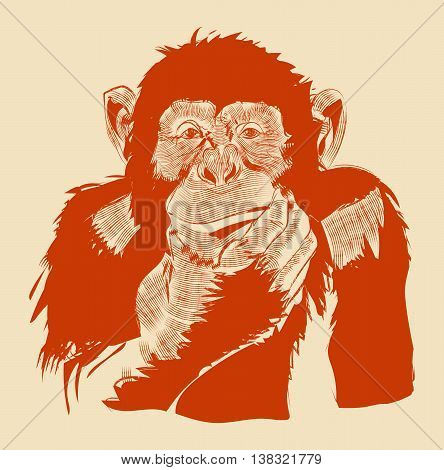 The graphic image of a monkey.Vector eps 10.