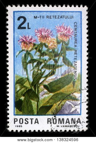 ZAGREB, CROATIA - JULY 18: A stamp printed in Romania shows flower Centaurea retezatensis, from the series 50 Years of Retezat National Park, circa 1985, on July 18, 2012, Zagreb, Croatia