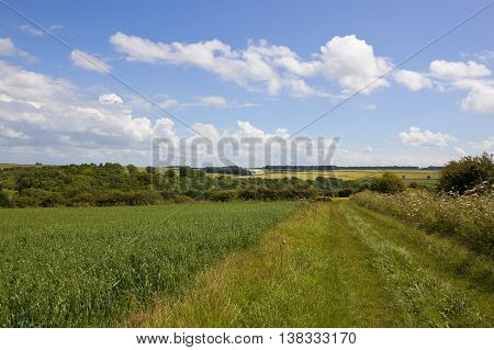 Oat Fields With Bridleway