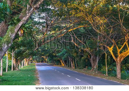Beautiful tropical trees line the roads in Labuan island,Malaysia.