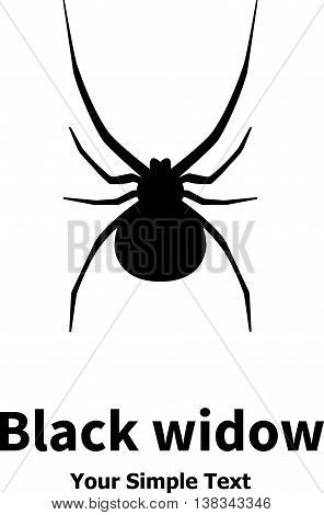 Vector illustration of a black spider. Black Widow. Isolated on white background.