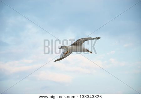 Seagul Against A Beautiful Sky With Clouds