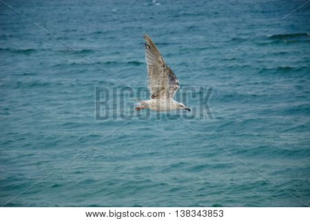 Seagul Against A Beautiful Sea