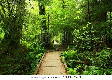 a picture of an exterior Pacific Northwest forest wood boardwalk trail