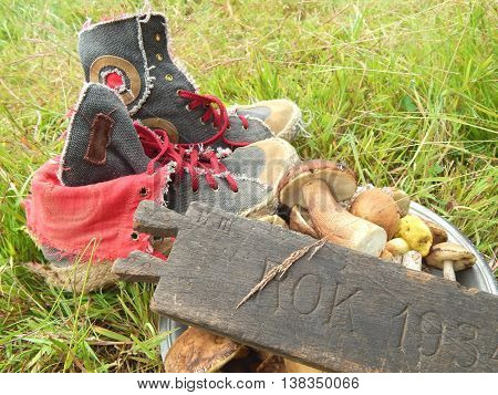Basket of mushrooms, shoes and wooden board on the grass