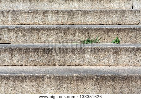 Abstract modern concrete stairs to building background. Cement dirty grunge staircase with little grass sprout. Stairway outdoors closeup