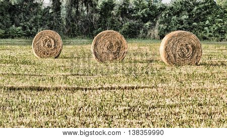 Hay bale on the field after harvest