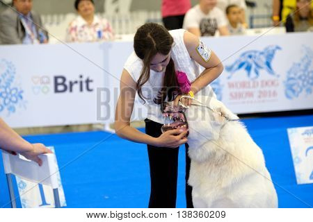 Moscow, Russia - June 25: Judge examining dog on the World Dog Show on June 25, 2016 in Crocus Expo Moscow