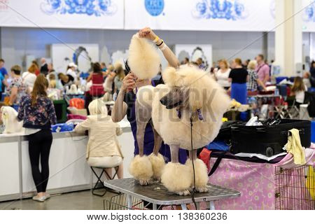 Moscow, Russia - June 25: Groomer prepares dog to the World Dog Show on June 25, 2016 in Crocus Expo Moscow