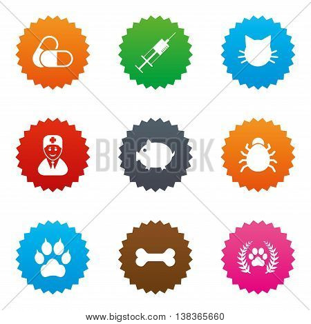 Veterinary, pets icons. Paw, syringe and bone signs. Pills, cat and doctor symbols. Stars label button with flat icons. Vector