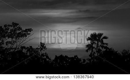 Moonscape Silhouette Ilustration