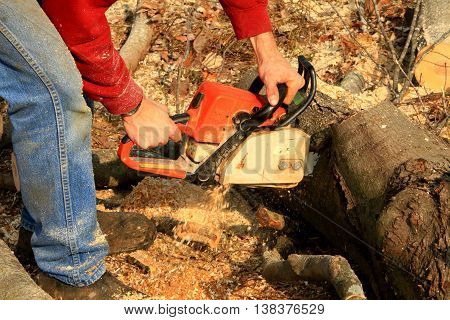 chain saw wood cutting autumn power saw