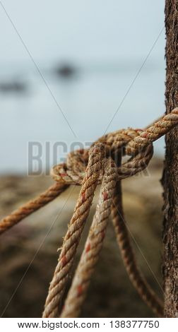 Knotted rope on a tree in front of blurred lake.