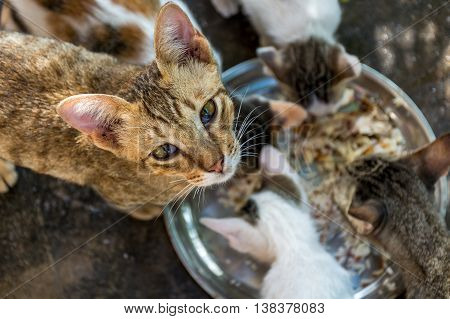 This is a picture of a cat eating his food happily.