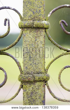 Part of green lichen covered metal fence