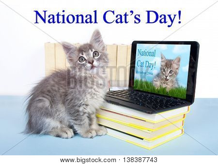 Gray tabby kitten looking at a screen on a miniature laptop type computer screen has kitten with text National Cat Day. Piles of books next to and under computer. National Cat's Day is October 29th