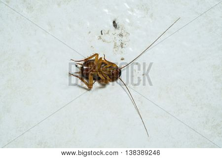 Dead cockroach on dirty tiles floor, dirty background