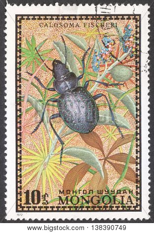 MOSCOW RUSSIA - JANUARY 2015: a post stamp printed in MONGOLIA shows a Calosoma fischeri beetle the series