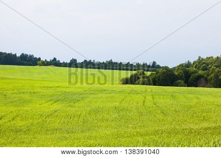 Summer rural landscape, green agro field, forest edge
