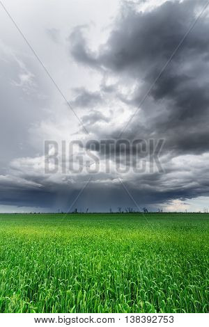 Clouds over a corn field / bright colorful picture ukraine field