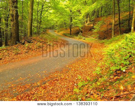 Forest path bellow beech trees. Spring afternoon in forest after rainy day.