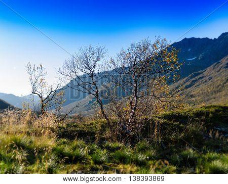 Horizontal Vivid  Norway Nature Landscape Tree Mountain Bokeh Ba