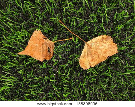 End of season. View into plastic grass and fallen dry autumn leaf. Artificial green turf texture .