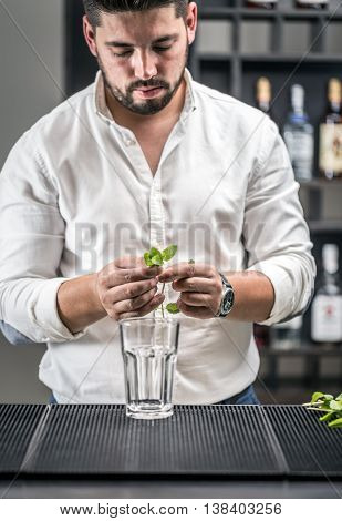Bartender started to make mojito cocktail drink