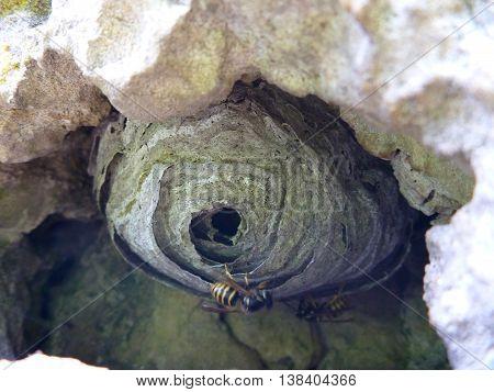 Round Wasp Nest Hidden In A Hole