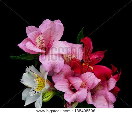 Alstroemeria Flowers On A Black