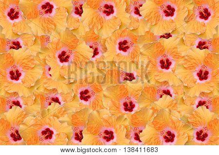 beautiful Hibiscus rosa sinensis flower pattern background